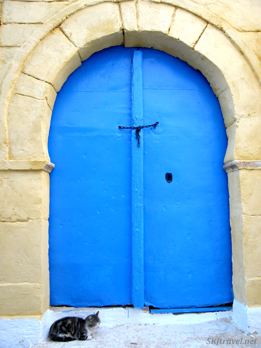 Bright blue door guarded by a small cat in the medina of Tunis, Tunisia.