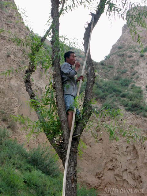 Villager about to cut down willow branches in Dang Jiashan Valley, Shaanxi Province, China.