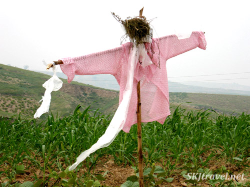Scarecrow fluttering in the breeze in crop fields in Dang Jia Shan village, Shaanxi Province, China.