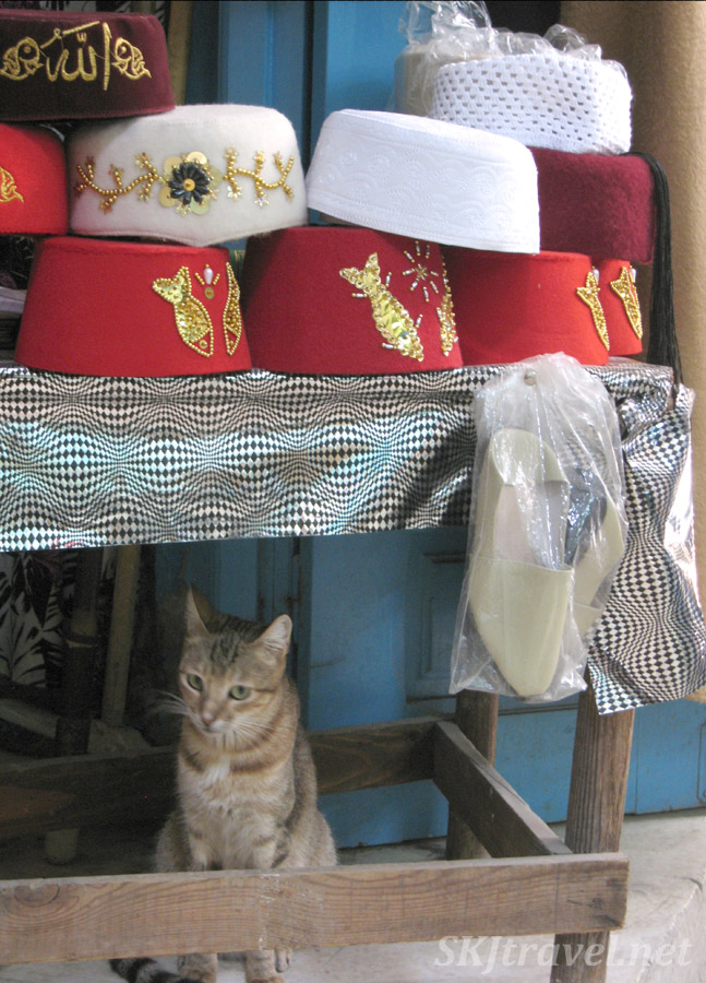 Kitty shopping for a fez with a fish design on it in the medina in Tunis, Tunisia.