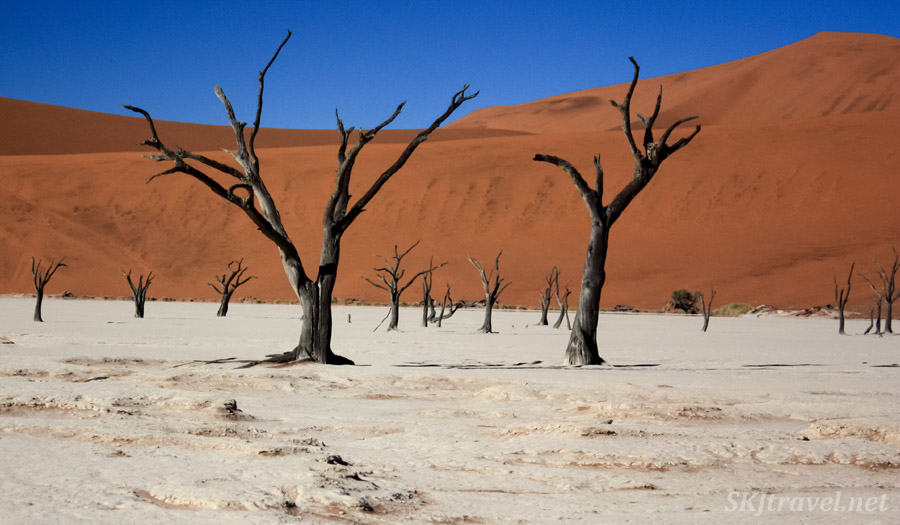 Skeleton trees of the Dead Vlei, Sossusvlei, Namibia.