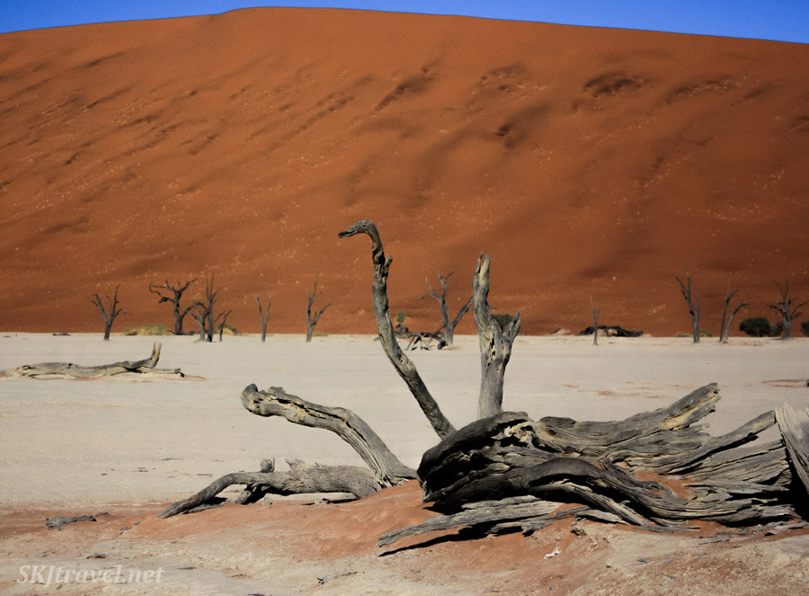 Dry bones of the skeleton trees at the Dead Vlei, Sossusvlei, Namibia.