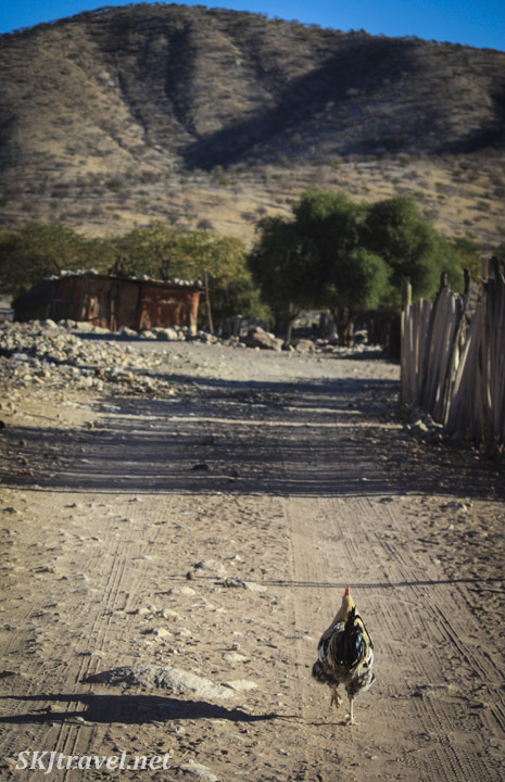 A lone chicken walking a down a road in a Himba village near Epupa Falls, Kaokoland, Namibia.