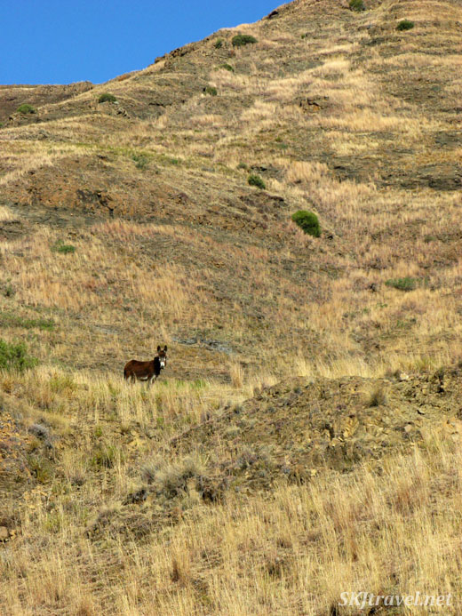 small donkey alone on a hillside