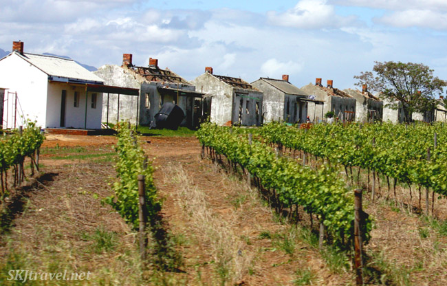 vineyards and worker huts