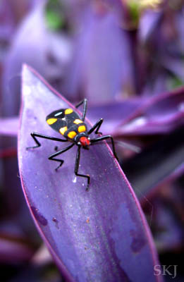 Bug on a plant in my yard at my flat at the UWEC, Entebbe, Uganda.