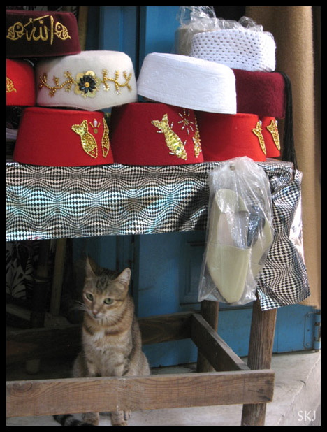 A cat sits beneath a table full of fez and other hats in the medina in Tunis, Tunisia. Photo by Shara Johnson
