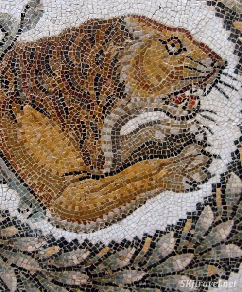 Ancient Roman tile mosaic of north African lion. Bardo Museum, Tunis, Tunisia.